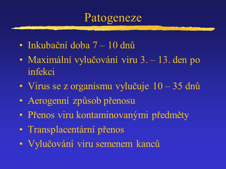 Patogeneze Inkubační doba 7 – 10 dnů Maximální vylučování viru 3. – 13. den po infekci Virus se z organismu vylučuje 10 – 35 dnů Aerogenní způsob přen