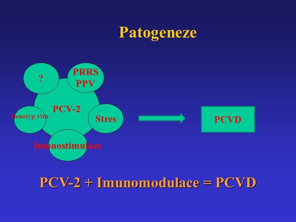 PCV-2 ? PRRS PPV Stres Genotyp viru Imunostimulace Patogeneze PCV-2 + Imunomodulace = PCVD PCVD