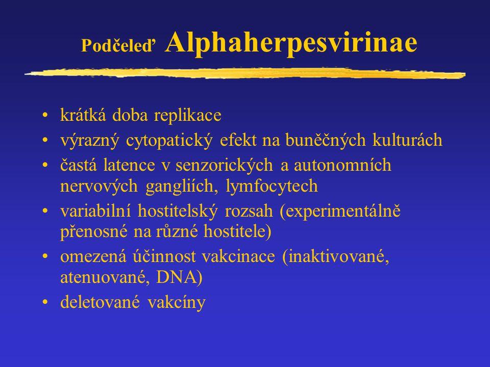 Podčeleď Alphaherpesvirinae Rod:SIMPLEXVIRUS Herpes simplex virus 1 (Herpesvirus člověka typ 1) Rod:VARICELLOVIRUS Varicella-Zoster virus (Herpesvirus člověka typ 3) Virus Aujeszkého choroby (Suid herpesvirus 1 - Pseudorabies virus) Virus Infekční bovinní rhinotracheitidy (Herpesvirus skotu 1) Herpesvirus koní typ 1 a 4 Virus koitálního exantému koní (Herpesvirus koní 3) Herpesvirus koček, herpesvirus psů Virus Markovy choroby drůbeže