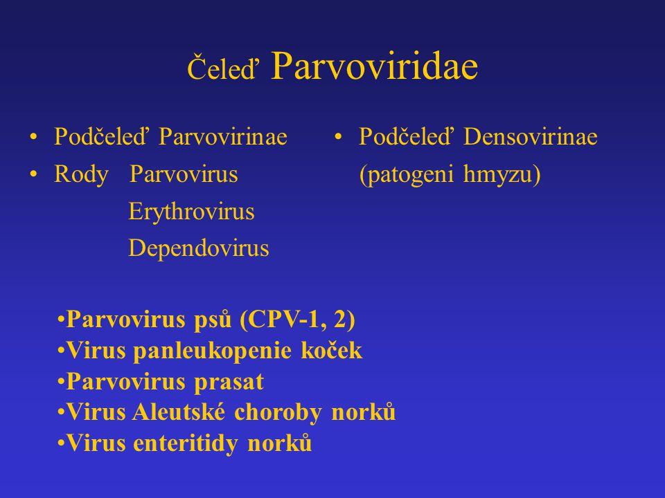 Čeleď Parvoviridae Podčeleď Parvovirinae Rody Parvovirus Erythrovirus Dependovirus Podčeleď Densovirinae (patogeni hmyzu) Parvovirus psů (CPV-1, 2) Vi