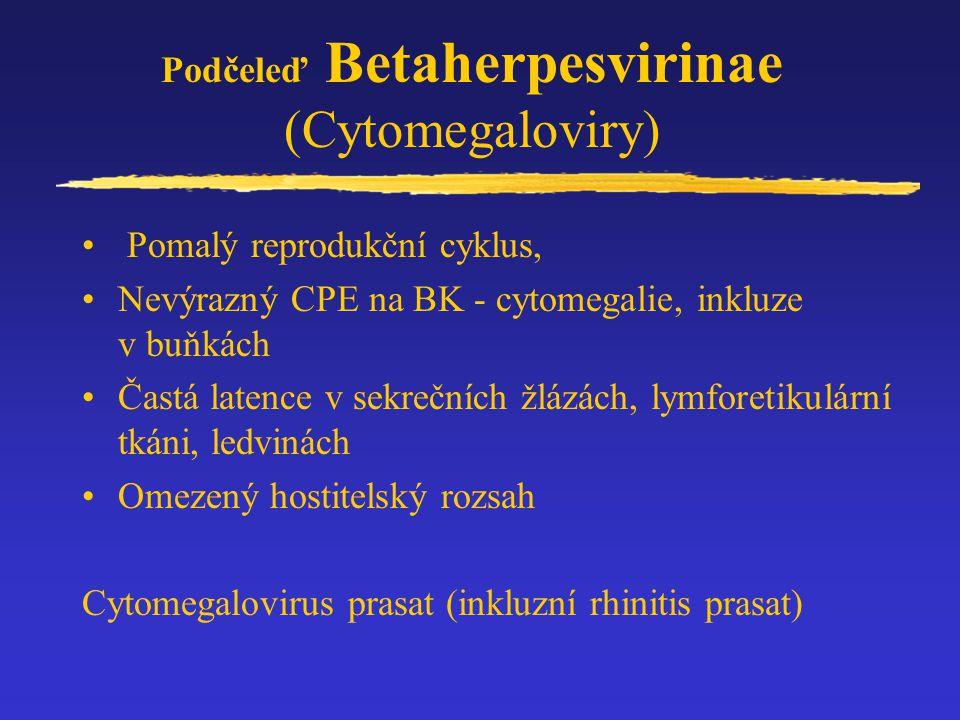 Rod Circovirus Psittacine beak and feather disease (PBFV) Cirkovirus skotu Cirkoviry prasat (PCV-1 a PCV-2) –PCV-1 (Porcine circovirus - 1) nepatogenní .