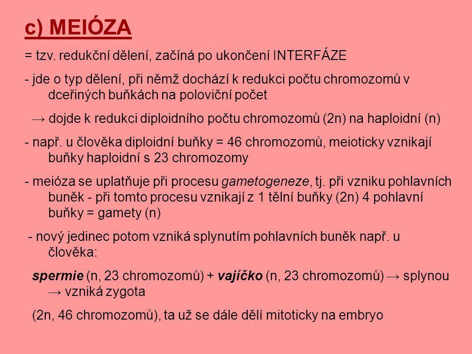 c) MEIÓZA = tzv. redukční dělení, začíná po ukončení INTERFÁZE - jde o typ dělení, při němž dochází k redukci počtu chromozomů v dceřiných buňkách na