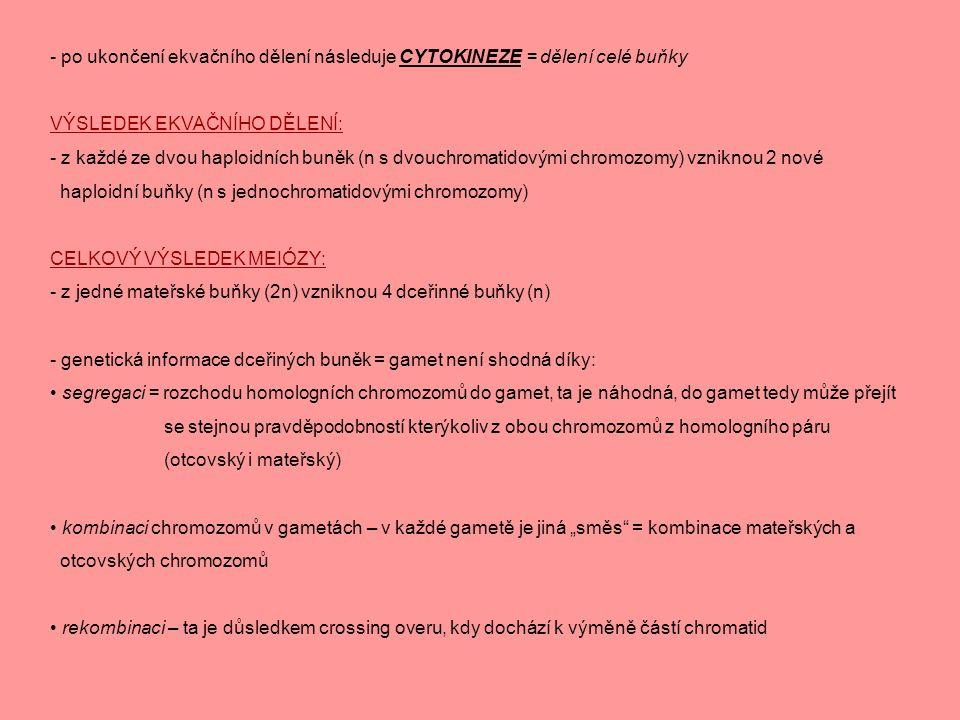 - po ukončení ekvačního dělení následuje CYTOKINEZE = dělení celé buňky VÝSLEDEK EKVAČNÍHO DĚLENÍ: - z každé ze dvou haploidních buněk (n s dvouchroma