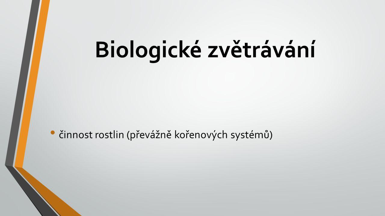 Biologické zvětrávání činnost rostlin (převážně kořenových systémů)
