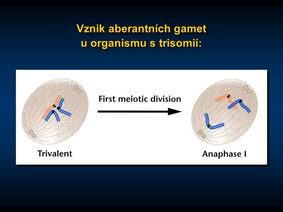 Vznik aberantních gamet u organismu s trisomií: Vznik aberantních gamet u organismu s trisomií: