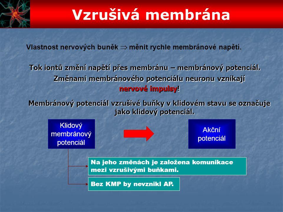 Vlastnost nervových buněk  měnit rychle membránové napětí. Změnami membránového potenciálu neuronu vznikají nervové impulsy! Tok iontů změní napětí p