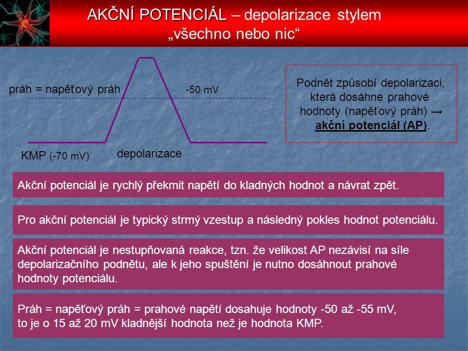KMP (-70 mV) depolarizace práh = napěťový práh Podnět způsobí depolarizaci, která dosáhne prahové hodnoty (napěťový práh) → akční potenciál (AP). -50