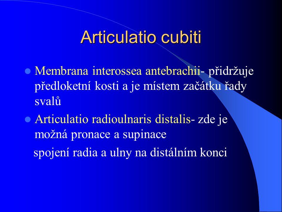 Membrana interossea antebrachii- přidržuje předloketní kosti a je místem začátku řady svalů Articulatio radioulnaris distalis- zde je možná pronace a