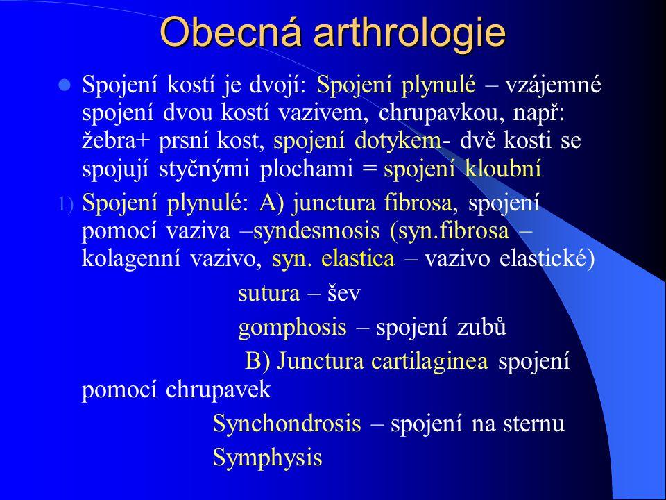 2)Junctura synovialis – kloub Kloub je spojení dvou, či více kostí, ležících uvnitř vazivového pouzdra a dotýkají se plochami povlečenými chrupavkou Styčné plochy jsou: Facies articulares, kde jedna je jamka (fossa articularis), druhá hlavice (caput articulare) Chrupavka styčných ploch je hyalinní, neosifikovaný zbytek původní chrupavky kostního základu (někde je vazivová chrupavka – mechanicky odolnější, např.: křížokyčelní kloub)