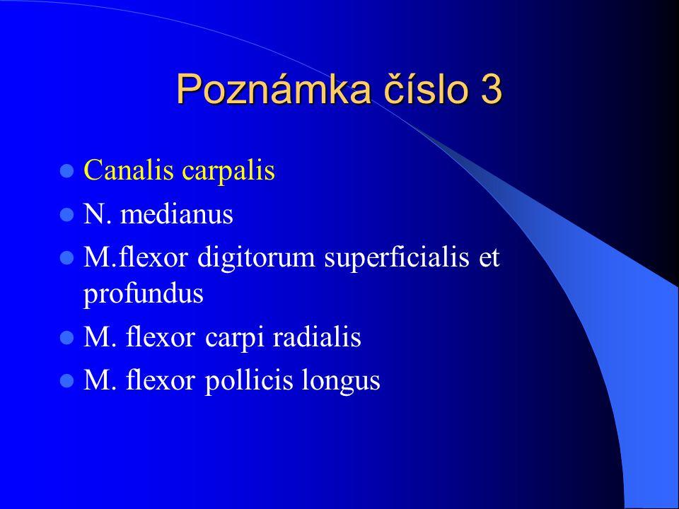 Poznámka číslo 3 Canalis carpalis N. medianus M.flexor digitorum superficialis et profundus M. flexor carpi radialis M. flexor pollicis longus