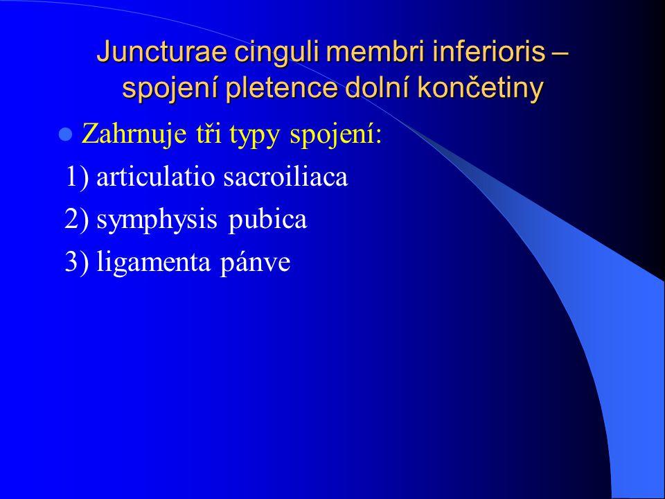 Juncturae cinguli membri inferioris – spojení pletence dolní končetiny Zahrnuje tři typy spojení: 1) articulatio sacroiliaca 2) symphysis pubica 3) li
