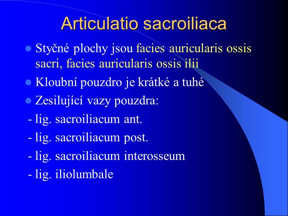 Articulatio sacroiliaca Styčné plochy jsou facies auricularis ossis sacri, facies auricularis ossis ilii Kloubní pouzdro je krátké a tuhé Zesilující v