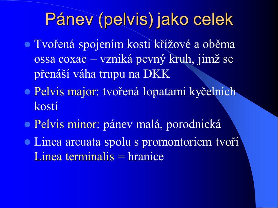 Pánev (pelvis) jako celek Tvořená spojením kosti křížové a oběma ossa coxae – vzniká pevný kruh, jimž se přenáší váha trupu na DKK Pelvis major: tvoře