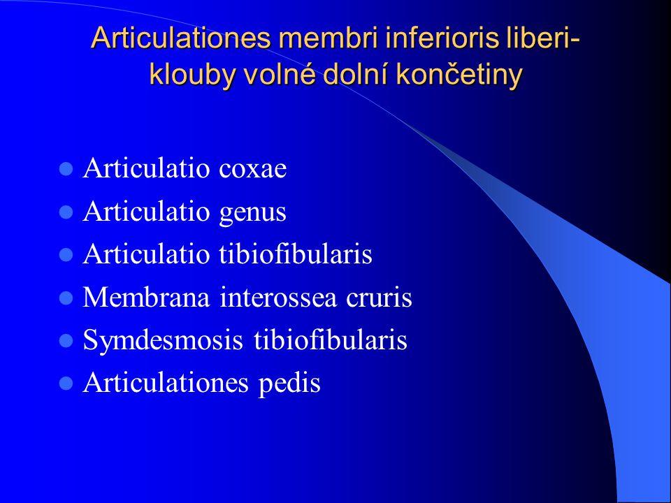 Articulationes membri inferioris liberi- klouby volné dolní končetiny Articulatio coxae Articulatio genus Articulatio tibiofibularis Membrana inteross