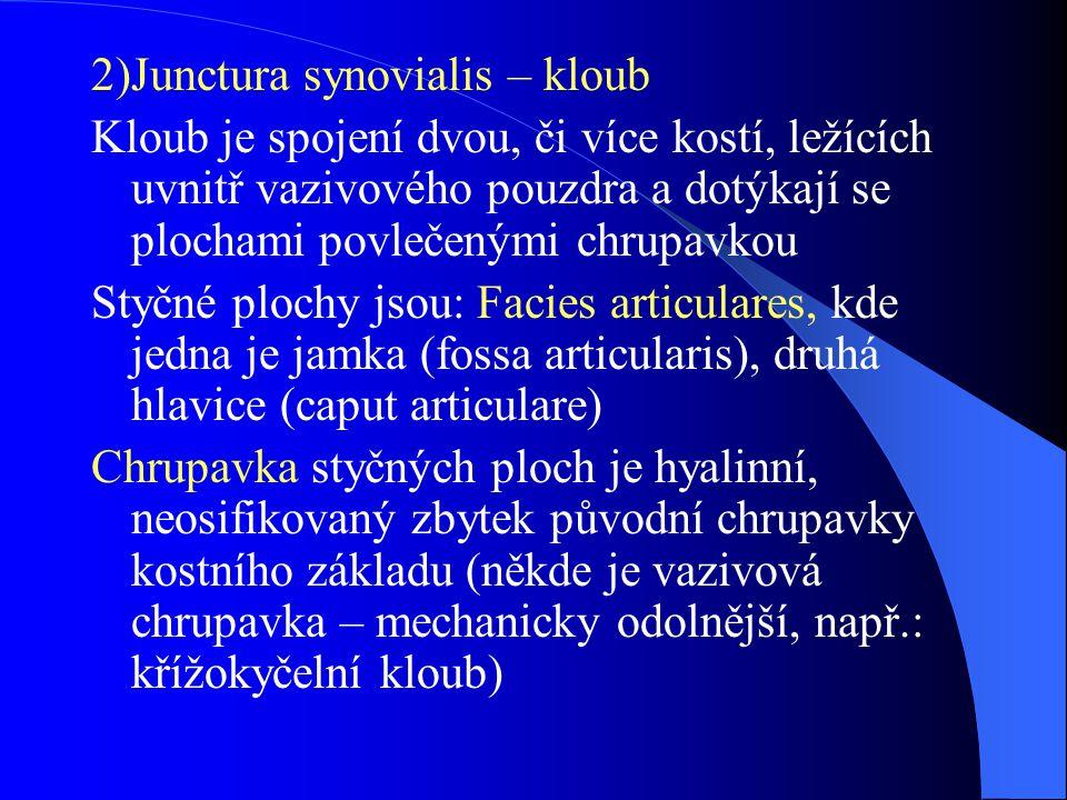 2)Junctura synovialis – kloub Kloub je spojení dvou, či více kostí, ležících uvnitř vazivového pouzdra a dotýkají se plochami povlečenými chrupavkou S