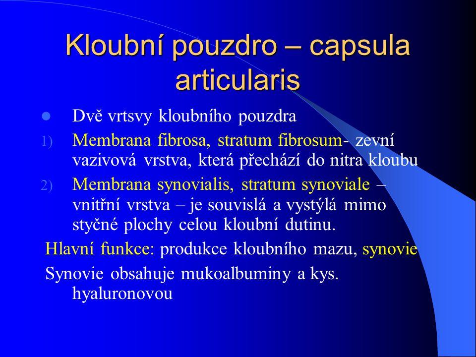 Kloubní pouzdro – capsula articularis Dvě vrtsvy kloubního pouzdra 1) Membrana fibrosa, stratum fibrosum- zevní vazivová vrstva, která přechází do nit