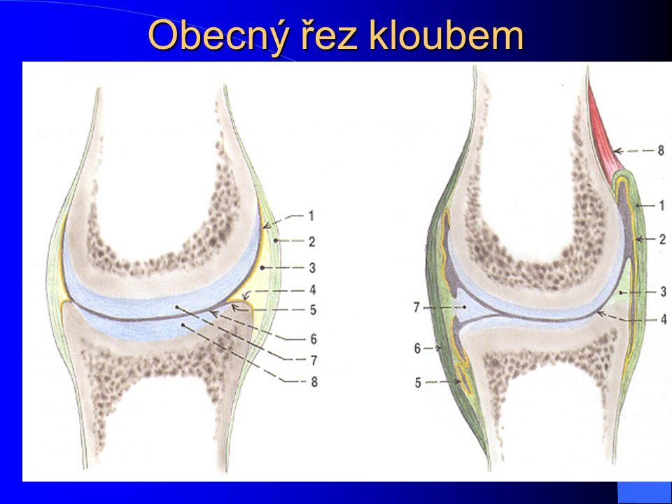 Zvláštní zařízení kloubu Labrum articulare Disci et menisci articulare Ligamenta Bursae synovialis, tíhové váčky Musculi articulares