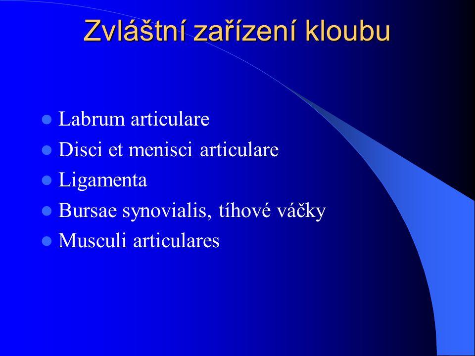Articulatio mediocarpalis Jedná se o skloubení mezi proximální a distální řadou karpálních kostí
