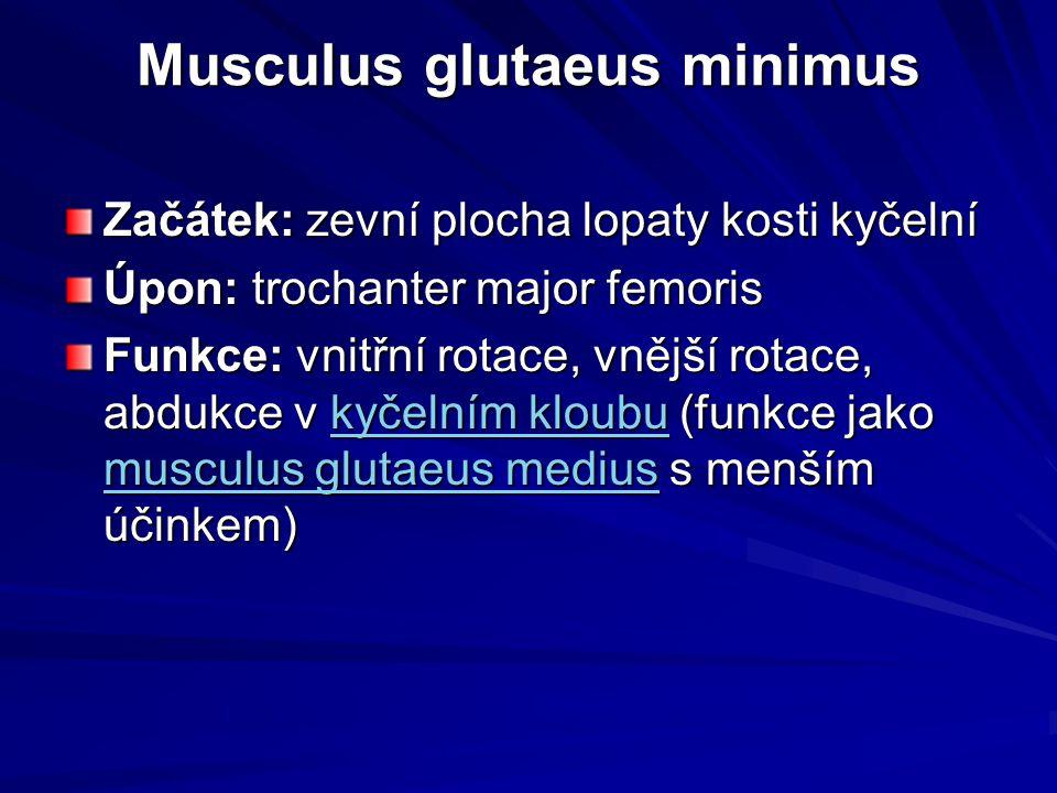 Musculus glutaeus minimus Musculus glutaeus minimus Začátek: zevní plocha lopaty kosti kyčelní Úpon: trochanter major femoris Funkce: vnitřní rotace,