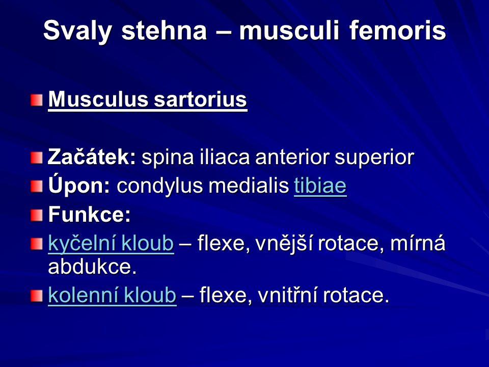Svaly stehna – musculi femoris Musculus sartorius Začátek: spina iliaca anterior superior Úpon: condylus medialis tibiae tibiae Funkce: kyčelní kloubk