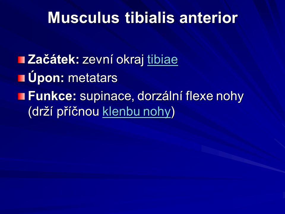 Musculus tibialis anterior Začátek: zevní okraj tibiae tibiae Úpon: metatars Funkce: supinace, dorzální flexe nohy (drží příčnou klenbu nohy) klenbu n