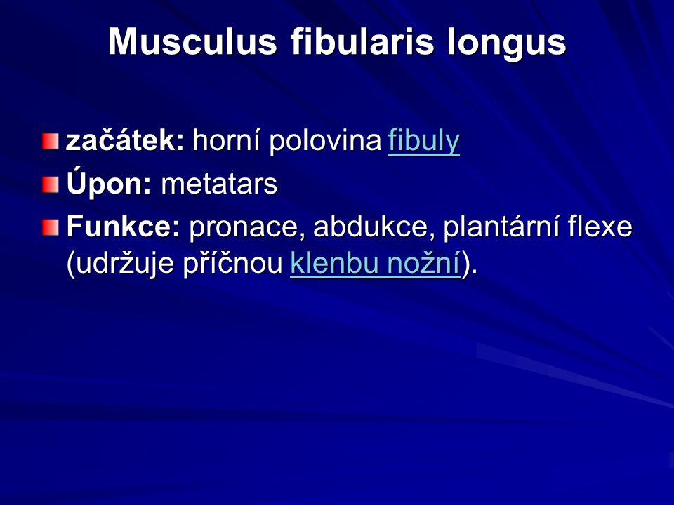 Musculus fibularis longus začátek: horní polovina fibuly fibuly Úpon: metatars Funkce: pronace, abdukce, plantární flexe (udržuje příčnou klenbu nožní