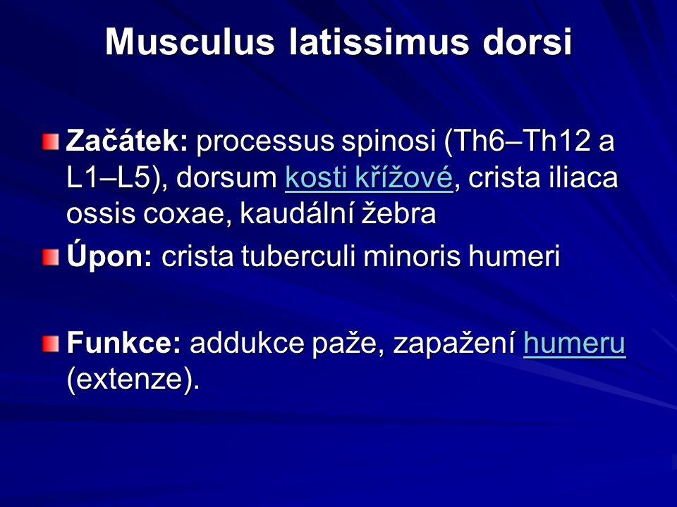 Musculus latissimus dorsi Musculus latissimus dorsi Začátek: processus spinosi (Th6–Th12 a L1–L5), dorsum kosti křížové, crista iliaca ossis coxae, ka