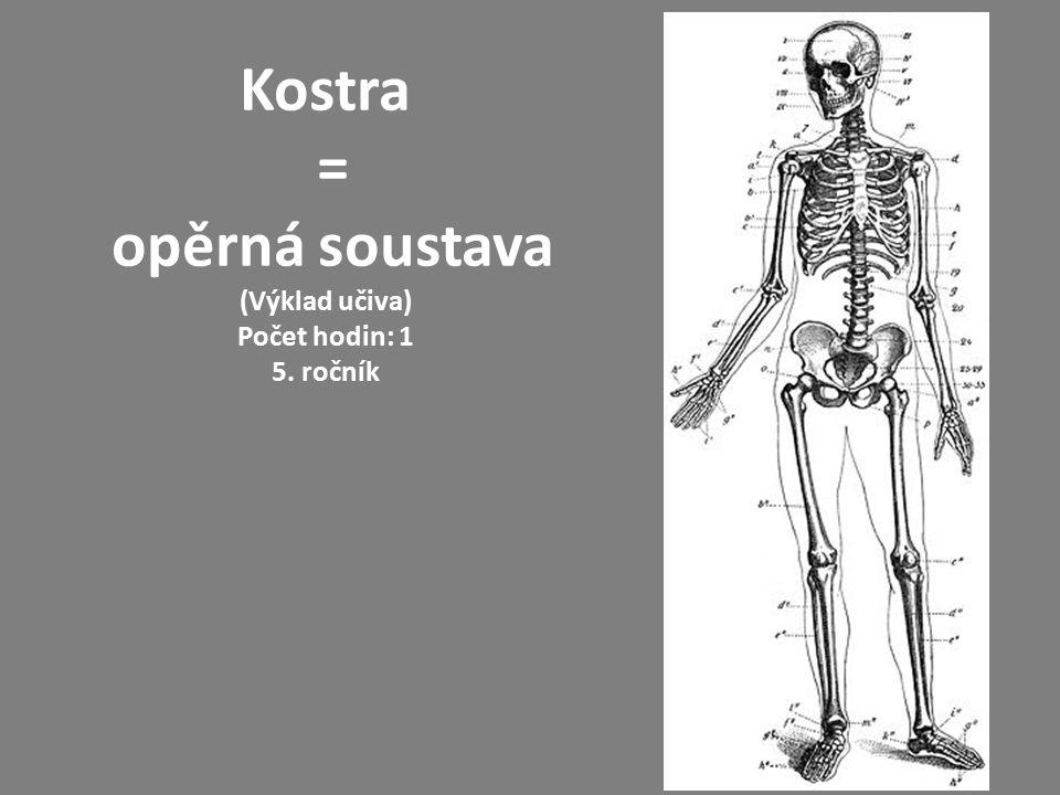 Funkce kostí Kostra je tvořena kostmi, chrupavkami a vazy.