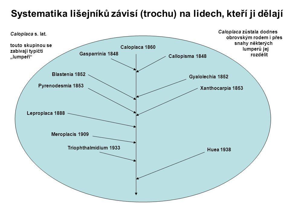 """Systematika lišejníků závisí (trochu) na lidech, kteří ji dělají Caloplaca s. lat. touto skupinou se zabívají typičtí """"lumpeři"""" Caloplaca 1860 Calopla"""
