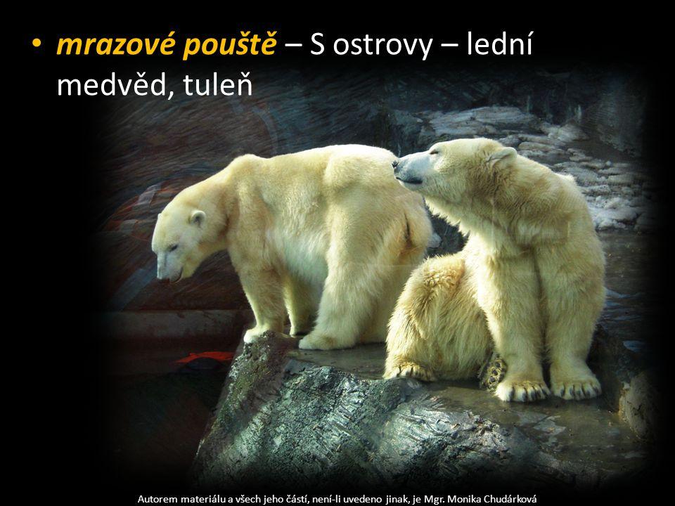 mrazové pouště – S ostrovy – lední medvěd, tuleň Autorem materiálu a všech jeho částí, není-li uvedeno jinak, je Mgr. Monika Chudárková