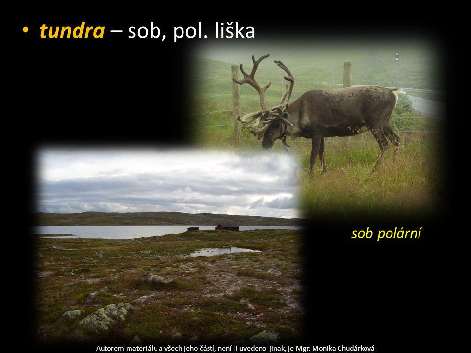 tundra – sob, pol. liška Autorem materiálu a všech jeho částí, není-li uvedeno jinak, je Mgr. Monika Chudárková sob polární
