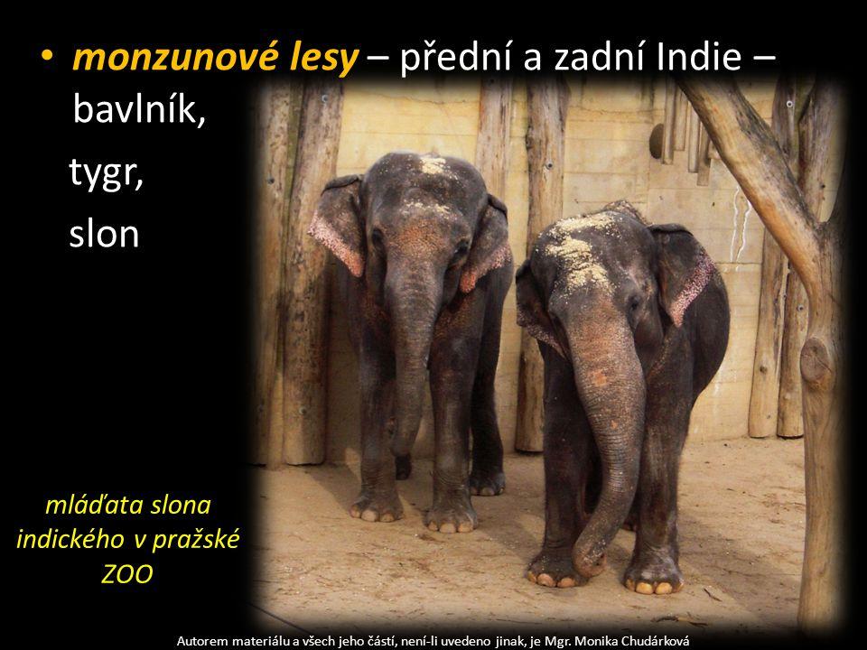 monzunové lesy – přední a zadní Indie – bavlník, tygr, slon Autorem materiálu a všech jeho částí, není-li uvedeno jinak, je Mgr. Monika Chudárková mlá