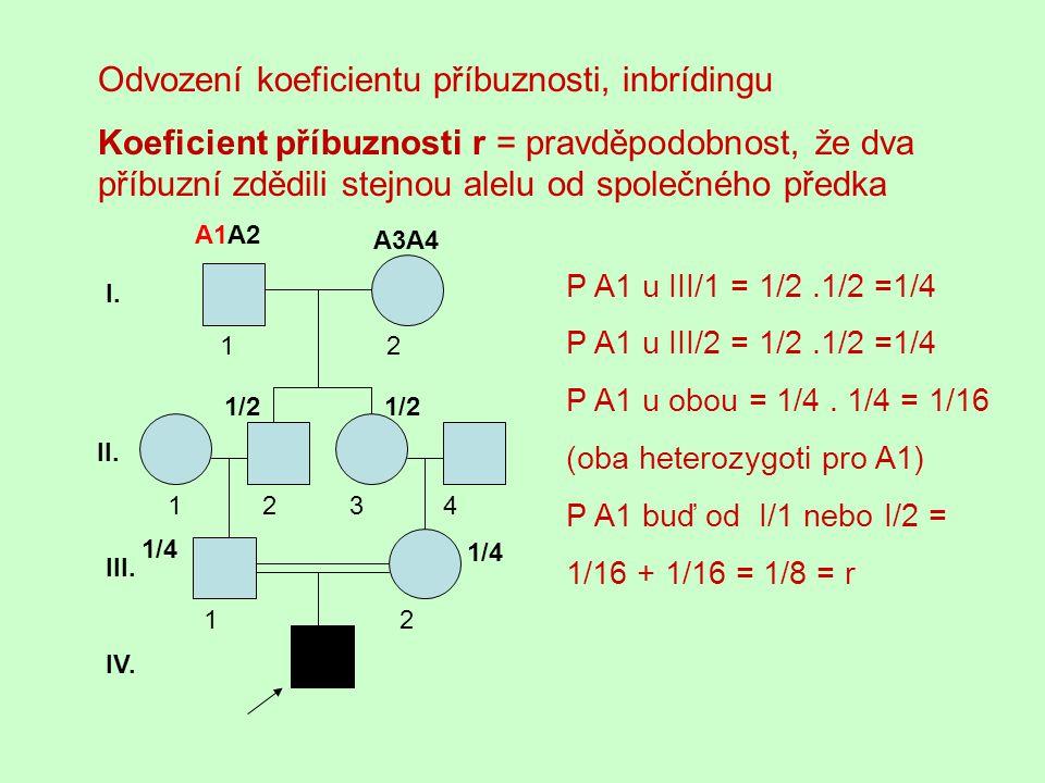 Odvození koeficientu příbuznosti, inbrídingu Koeficient příbuznosti r = pravděpodobnost, že dva příbuzní zdědili stejnou alelu od společného předka A1