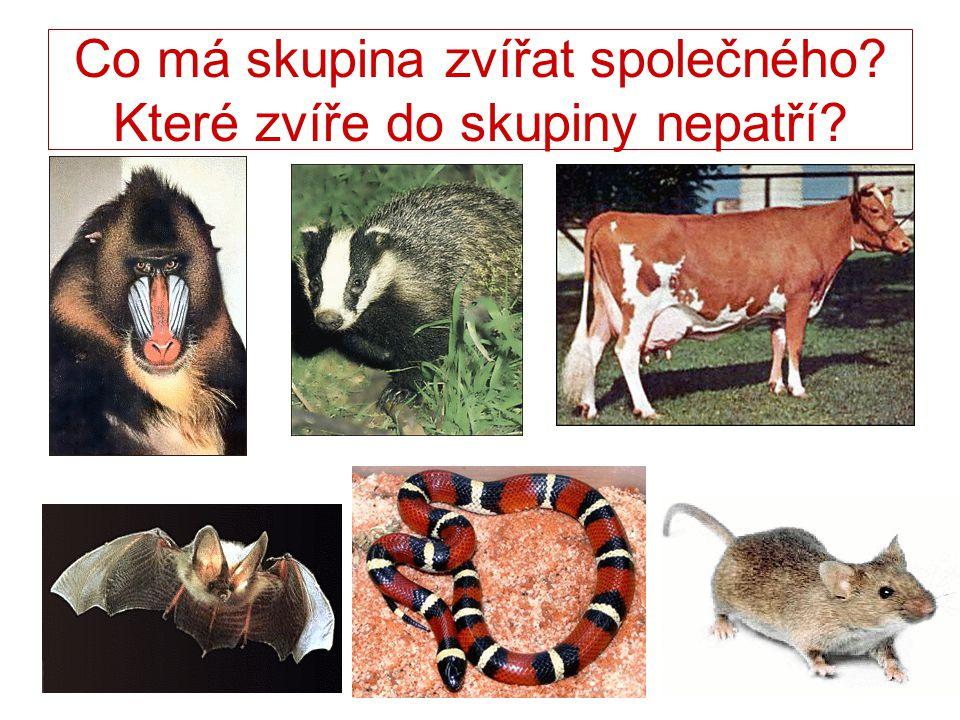 Co má skupina zvířat společného? Které zvíře do skupiny nepatří?