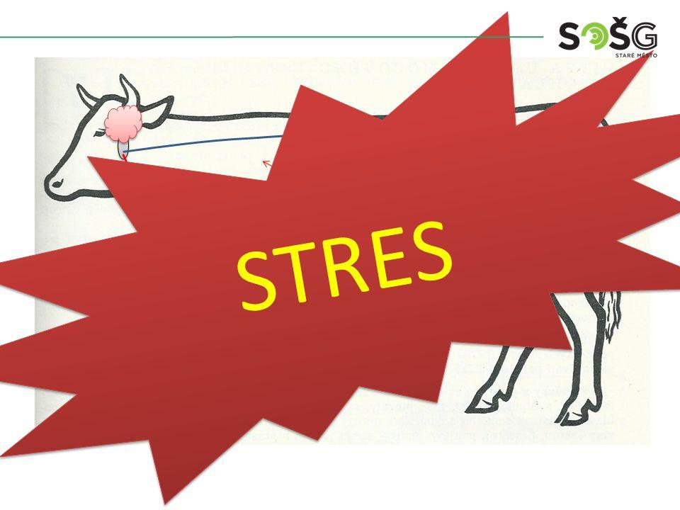 Hypofýza Oxytocin 10 – 20 vteřin Osušení Stres Nadledviny ADRENALIN STRES