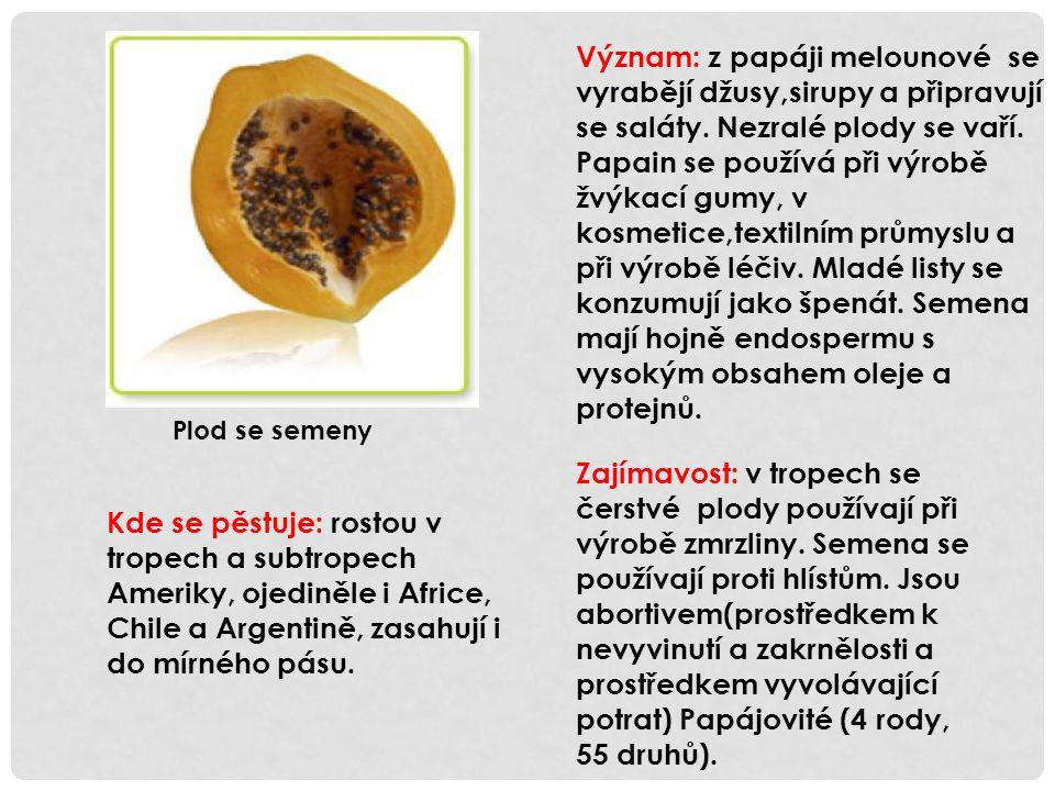 Význam: z papáji melounové se vyrabějí džusy,sirupy a připravují se saláty. Nezralé plody se vaří. Papain se používá při výrobě žvýkací gumy, v kosmet