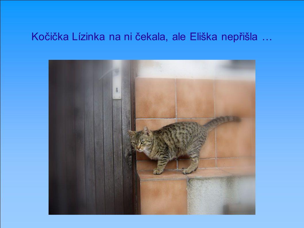 Kočička Lízinka na ni čekala, ale Eliška nepřišla …