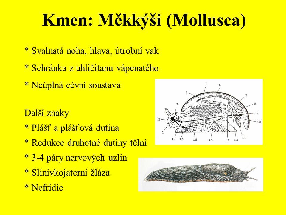 Kmen: Měkkýši (Mollusca) * Svalnatá noha, hlava, útrobní vak * Schránka z uhličitanu vápenatého * Neúplná cévní soustava Další znaky * Plášť a plášťov