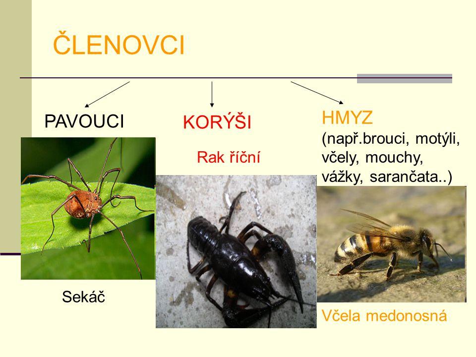 ČLENOVCI PAVOUCI KORÝŠI HMYZ (např.brouci, motýli, včely, mouchy, vážky, sarančata..) Sekáč Rak říční Včela medonosná