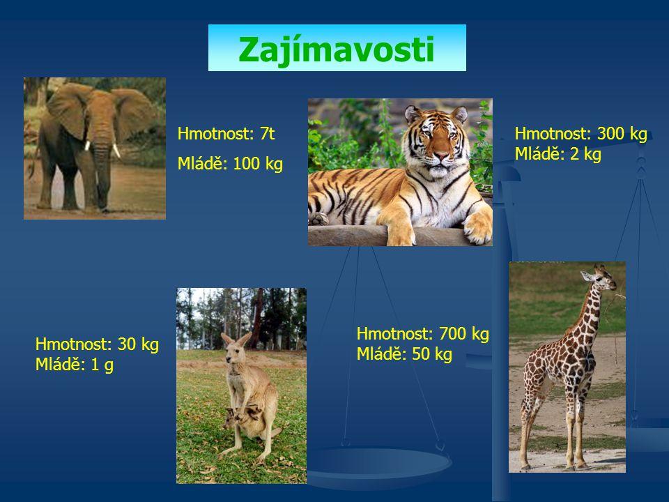 Zajímavosti Hmotnost: 7t Mládě: 100 kg Hmotnost: 300 kg Mládě: 2 kg Hmotnost: 30 kg Mládě: 1 g Hmotnost: 700 kg Mládě: 50 kg