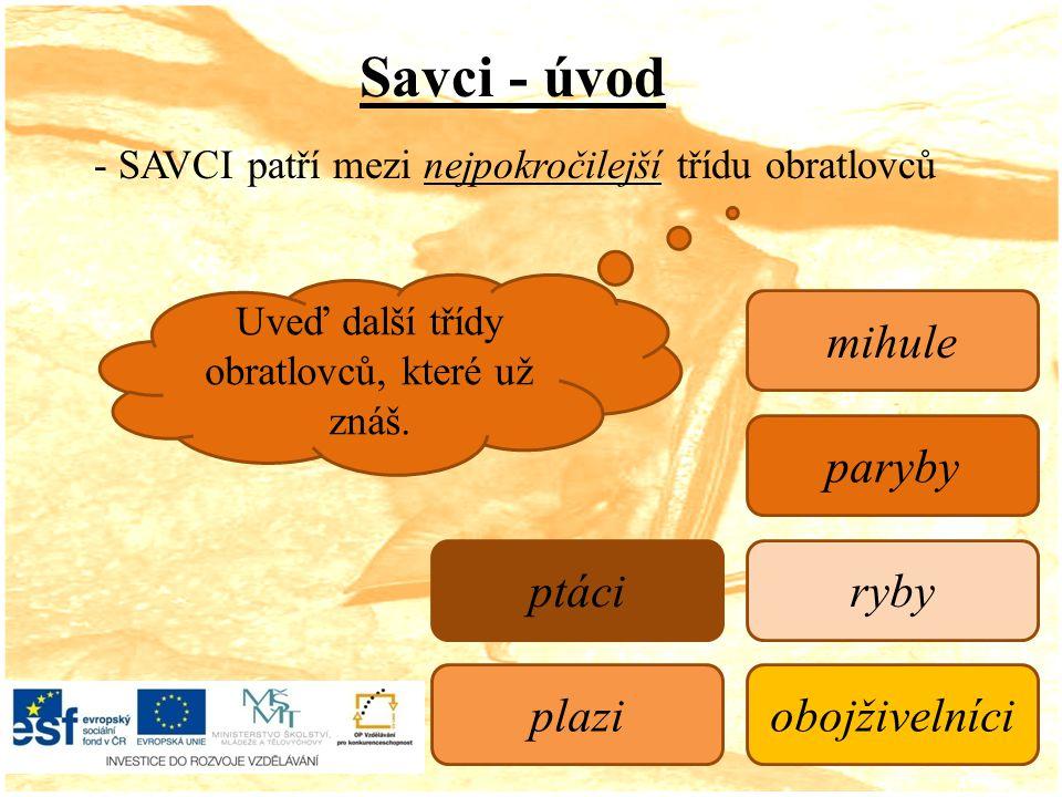 Savci - úvod - SAVCI patří mezi nejpokročilejší třídu obratlovců Uveď další třídy obratlovců, které už znáš.