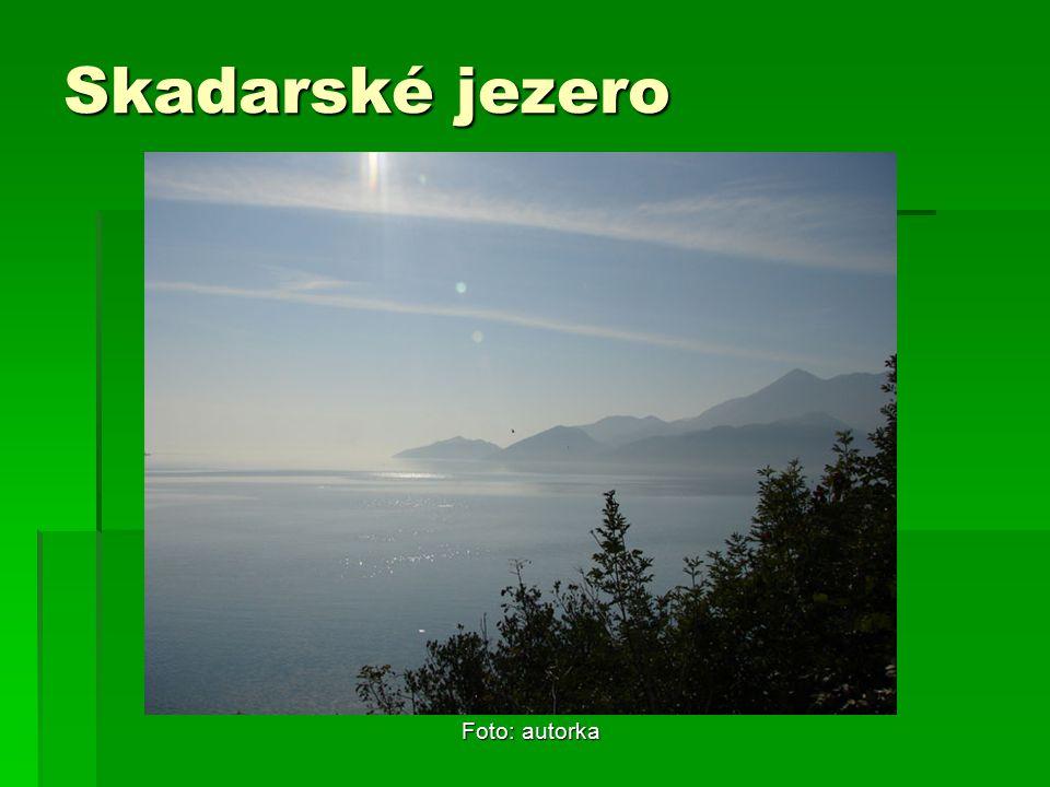 Skadarské jezero Foto: autorka
