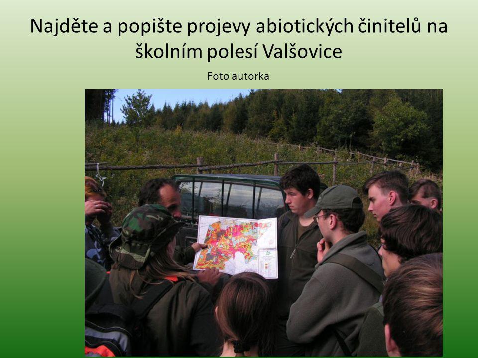 Najděte a popište projevy abiotických činitelů na školním polesí Valšovice Foto autorka