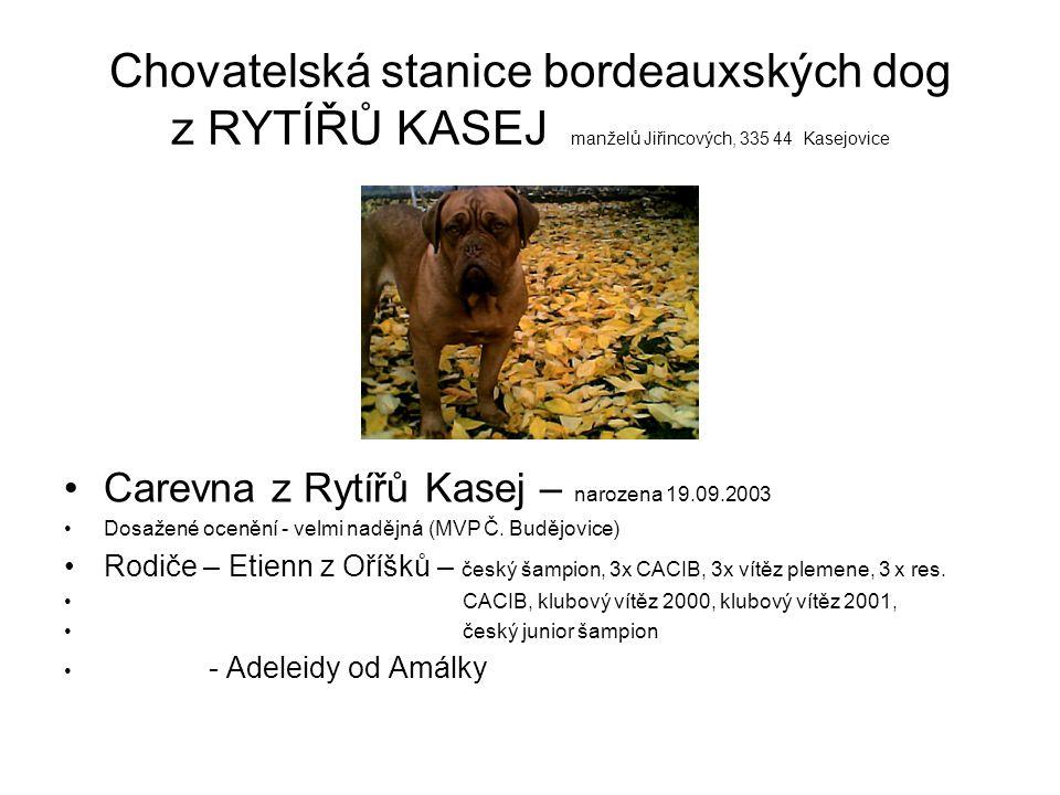 Chovatelská stanice bordeauxských dog z RYTÍŘŮ KASEJ manželů Jiřincových, 335 44 Kasejovice Carevna z Rytířů Kasej – narozena 19.09.2003 Dosažené ocen