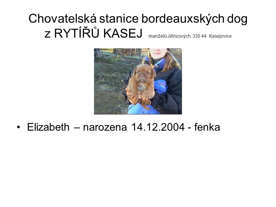 Chovatelská stanice bordeauxských dog z RYTÍŘŮ KASEJ manželů Jiřincových, 335 44 Kasejovice Eldorádo – narozen 14.12.2004 - pejsek