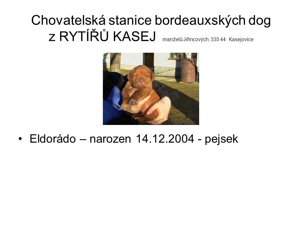 Chovatelská stanice bordeauxských dog z RYTÍŘŮ KASEJ manželů Jiřincových, 335 44 Kasejovice Egon – narozen 14.12.2004 - pejsek