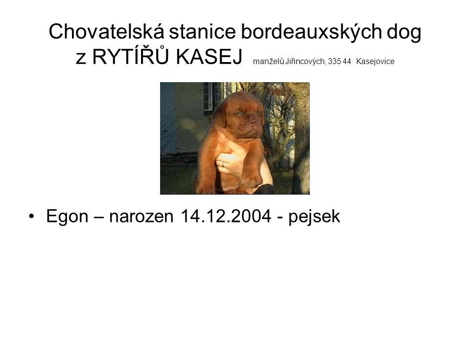 Chovatelská stanice bordeauxských dog z RYTÍŘŮ KASEJ manželů Jiřincových, 335 44 Kasejovice Elvis – narozen 14.12.2004 - pejsek