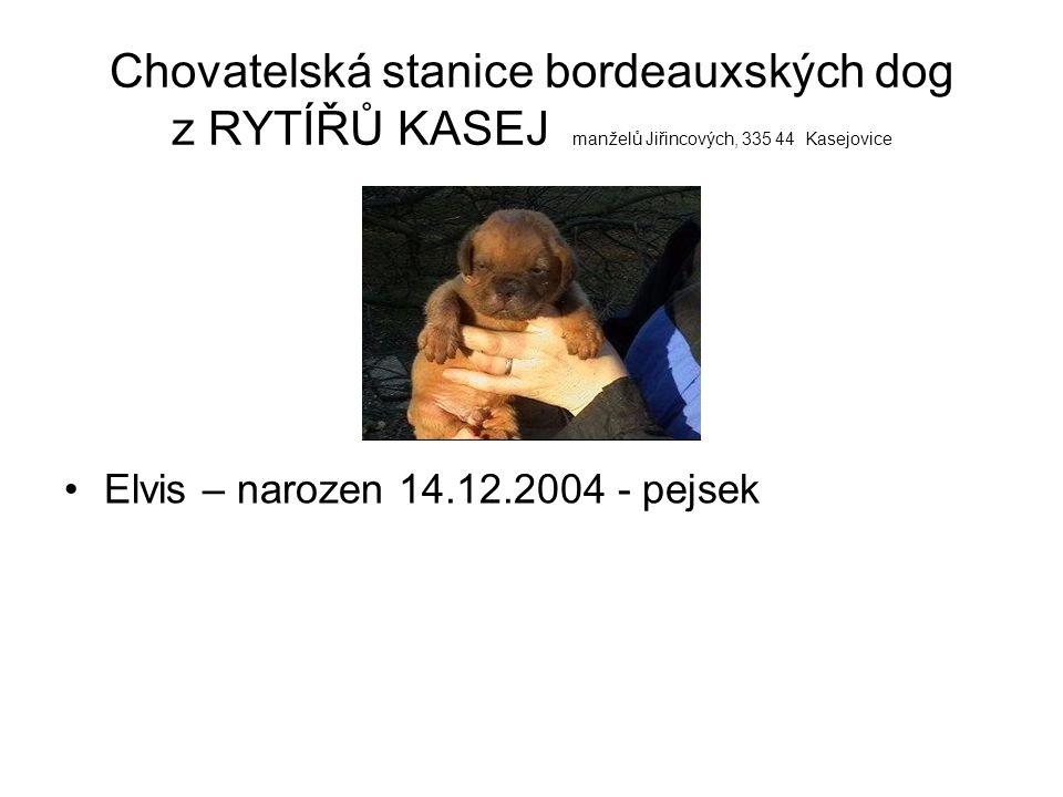 IR Desperado z Oříšků – otec rtg.0/0 (v rodokmenu světová vítězka Amsel v.