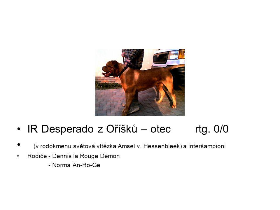 IR Desperado z Oříšků – otec rtg. 0/0 (v rodokmenu světová vítězka Amsel v. Hessenbleek) a interšampioni Rodiče - Dennis la Rouge Démon - Norma An-Ro-