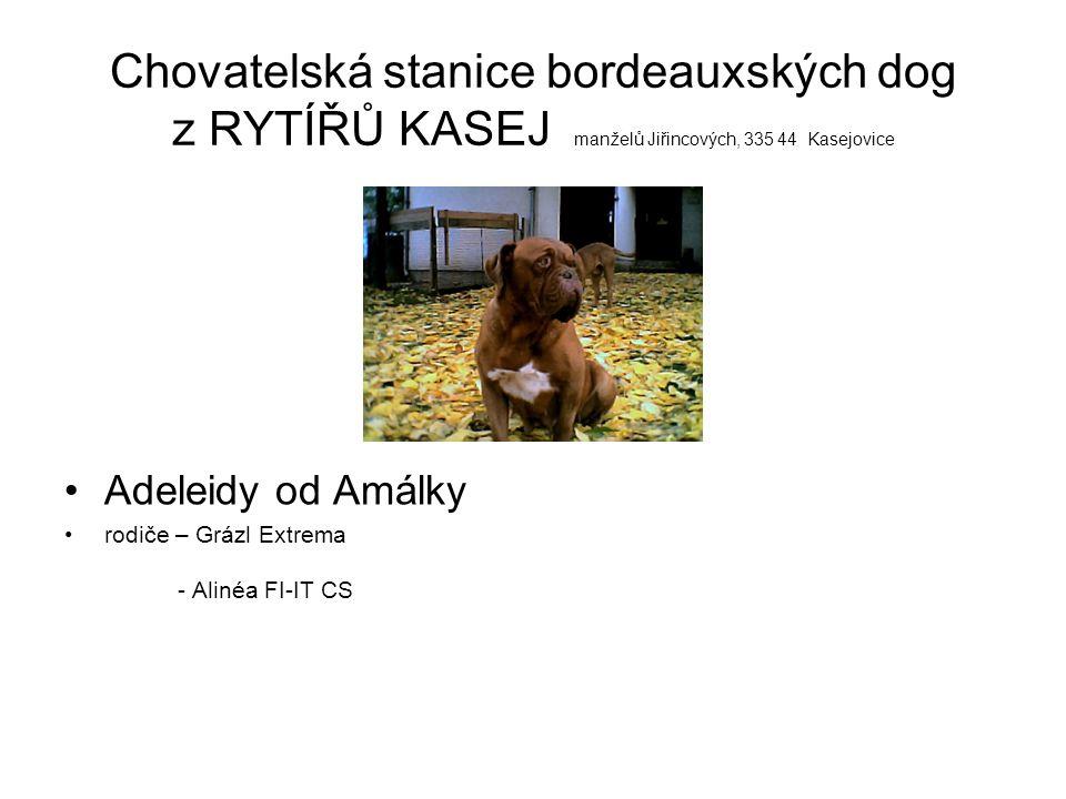 Chovatelská stanice bordeauxských dog z RYTÍŘŮ KASEJ manželů Jiřincových, 335 44 Kasejovice Adeleidy od Amálky rodiče – Grázl Extrema - Alinéa FI-IT C
